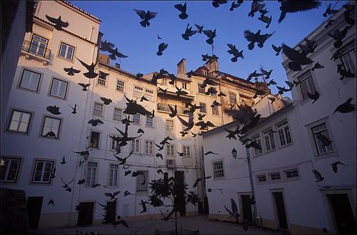 «Coimbra – Largo Romal», foto de Aboutcentro, 2 de julio de 2009.
