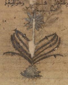Arabe 2850, fol. 66v RECORTE