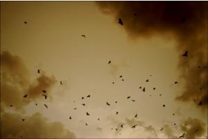 «Inglorious basterds (Metafora insignia III)», foto de sydnzm, 4 de marzo de 2009.